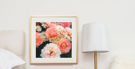 Check out this Artsy Etsy Gift Guide, including this Peach Rose Photographic print by Jessica Nichols